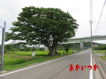 お竹地蔵3
