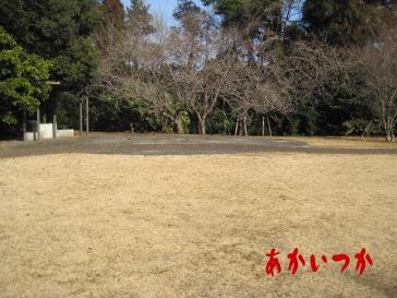 天使の森公園3