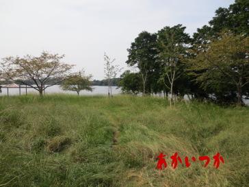頓田貯水池1