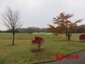 恵庭公園3