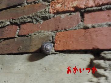 相坂トンネル6