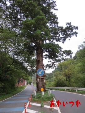 本山の一本杉の3