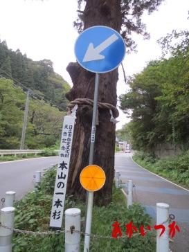 本山の一本杉の5