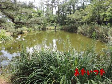 首洗池(篠原古戦場跡)6