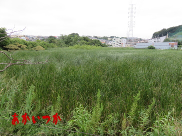 二ツ池公園4