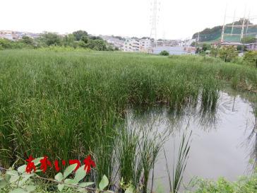 二ツ池公園5