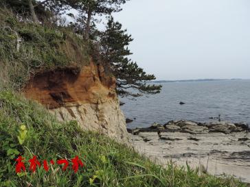 荒崎海岸4