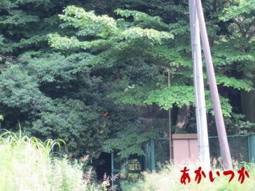 旧道正トンネル3