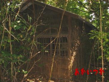 サザエさん家3