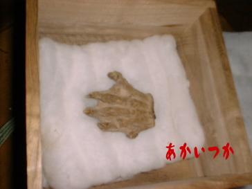 河童の手 志岐八幡宮4