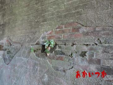旧佐敷トンネル10