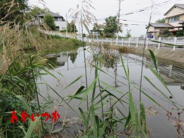 阿弥陀婆の池