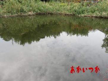 阿弥陀婆の池6