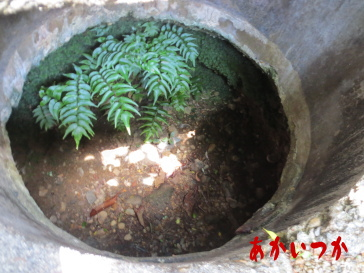 壺井地蔵5