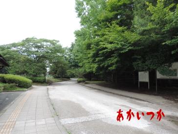 台原森林公園3
