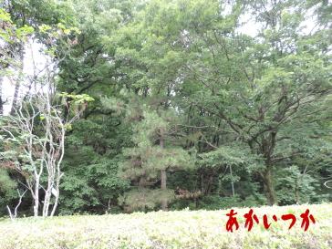 台原森林公園5