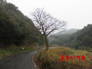 チチャの木2