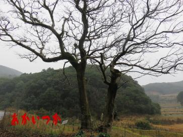 チチャの木4