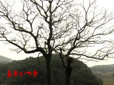 チチャの木6