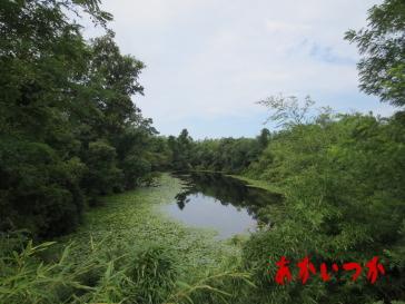 ドンチ池(論地池)4