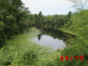 ドンチ池(論地池)5