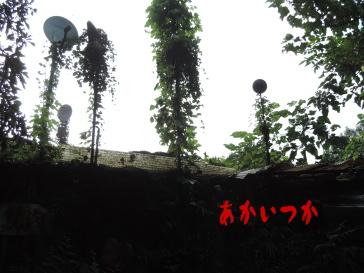 アンテナの家5
