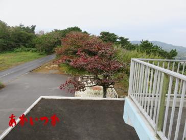 嵐山展望台5