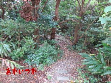 ガーナ―森(くじら山)3