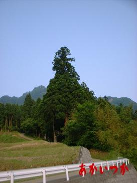 穴森神社2