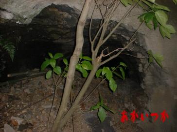 臼津隧道5