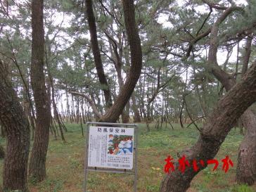 虹の松原2
