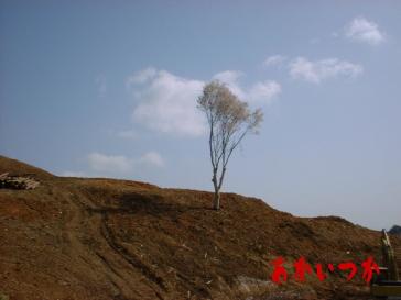 祟りの桜2