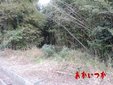 シガイの森4