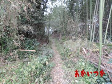 シガイの森5