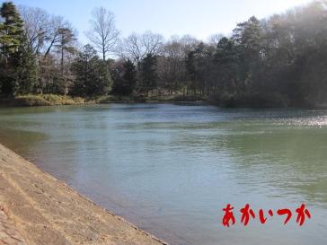 たっちゃん池2