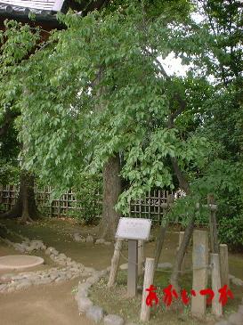 哲学堂公園8