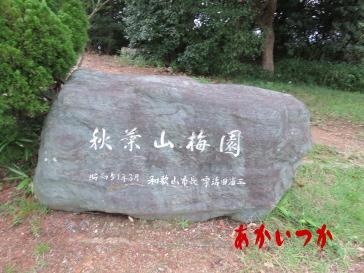 秋葉山公園4